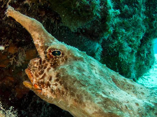 batfish photos belize vacations