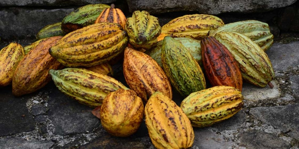 cacaofest_2-big