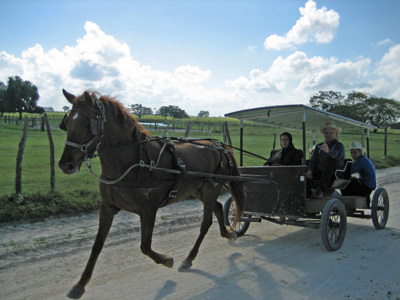 belize-mennonite-carriage