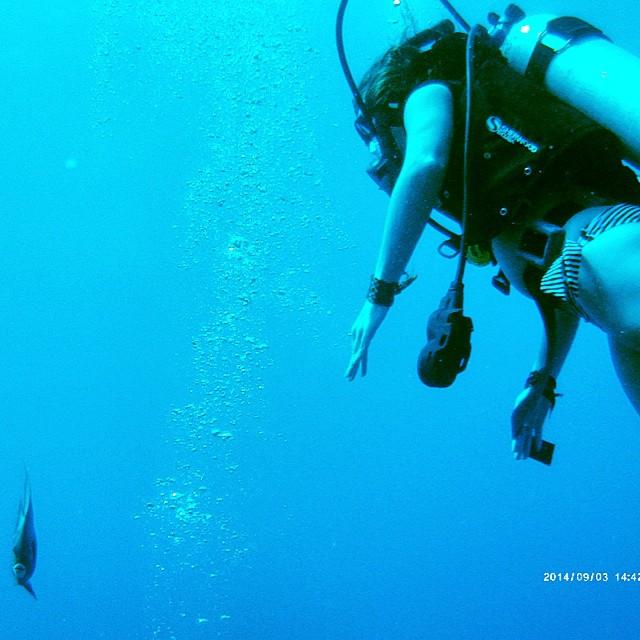 placencia belize diving
