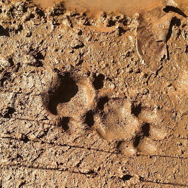 cockscomb basin wildlife sanctuary belize