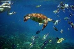 So Many Islands - So Many Snorkeling Locations!