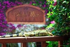 Exotic Belize - Love our Resident Iguanas, Birds & Geckos