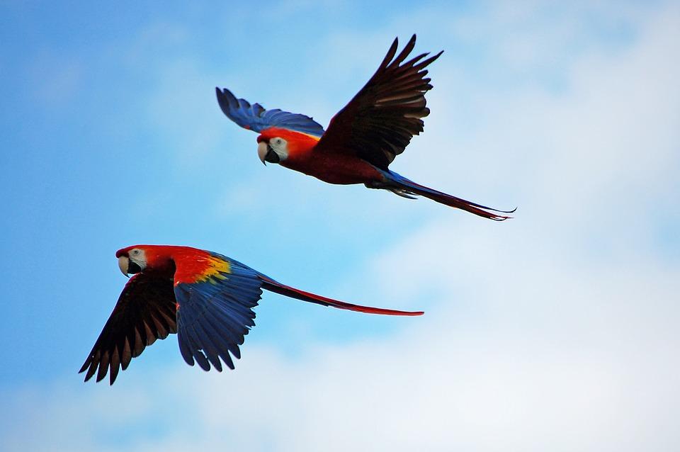 birding in southern belize